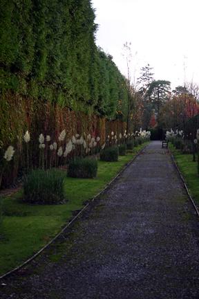 Garden - IMG_2344
